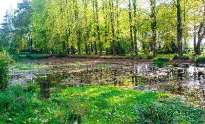 Lovell Quinta Arboretum