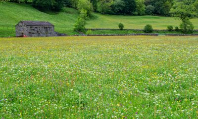 The wonderful Muker Meadows, featured in Secret Dales